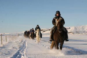 riding_icelandadvice