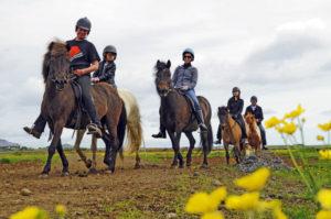 horse riding tour iceland