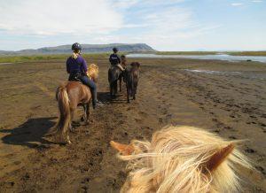 Stallion_ride_tour_icelandadvice