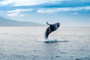 whale watching tours iceland